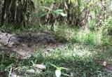 Kinh hoàng: Nam thanh niên dìm chết bé gái lớp 6, chôn xác trong vườn hoang