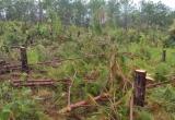 Lâm Đồng: Gần 10ha rừng bị phá trái phép
