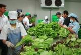 Hà Nội phát hiện hàng loạt mẫu thực phẩm được công nhận là 'sạch' nhưng cực 'bẩn'