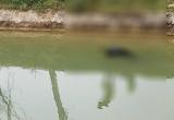 Ngày 30 Tết, bàng hoàng phát hiện thi thể cụ ông nổi trên kênh thủy lợi
