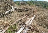 Đắk Nông: Lực lượng bảo vệ rừng bất lực trước sự lộng hành của lâm tặc