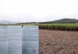 Nghệ An: Sở NN&PTNN thừa nhận tình trạng tranh mua nguyên liệu mía đường