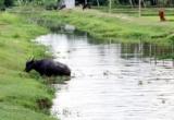 Thừa Thiên Huế: Bé gái 11 tuổi bị mất tích khi đi chăn trâu cách nhà 2km