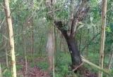 Bí ẩn thi thể treo trên cây trong rừng rậm ở Lộc Điền