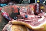 Công nghệ phù phép lợn nái thành lợn rừng
