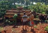Đắk Nông: Lật xe máy cày trong vườn cà phê, 3 người thương vong
