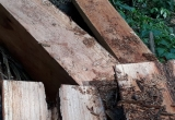 Kỳ 2 - Tận diệt rừng đầu nguồn ở Yên Bái: Hạt kiểm lâm huyện Văn Chấn 'không' phát hiện ra phá rừng(!?)
