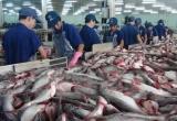 Audio Tài chính Plus: Kim ngạch xuất khẩu gạo và cá tra tăng cả lượng lẫn giá trị