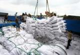 Audio Tài chính Plus: Xuất khẩu tăng 40%, tín hiệu vui của ngành lúa gạo