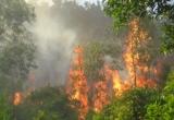 Huế: Đang làm rõ nguyên nhân cháy rừng thông ở Trung tâm Văn hóa Huyền Trân