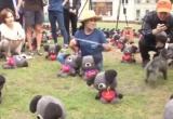 Hàn Quốc kêu gọi người dân không ăn thịt chó