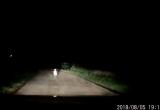 [Clip]: Hoảng hồn thấy em bé đứng giữa đường trong đêm