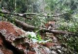 Vườn quốc gia Ba Bể tiếp tục bị xâm hại