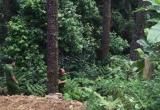 Vĩnh Phúc: Xe mất phanh lao xuống vực sâu, 2 người thương vong