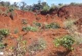 Lâm Đồng: Nhiều diện tích cà phê bị chôn vùi do sạt lở đất