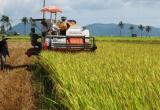 Ký hợp đồng cho máy gặt - Khi những cánh đồng không còn bình yên