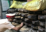 Thừa Thiên Huế: Tạm giữ xe ô tô chở khối lượng lớn gỗ quý không rõ nguồn gốc