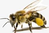 Nghệ An: Hàng chục người bị đàn ong tấn công phải nhập viện khi đi tảo mộ