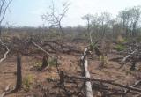 Vụ phá hơn 7,3ha rừng ở Gia Lai: Bắt giữ một đối tượng