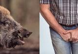 Bình Phước: Chủ trang trại bị lợn táp rách toạc 'của quý'