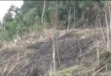 Nghệ An: Phó chủ tịch UBND tham gia phá rừng