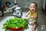 Ông bố trẻ 9x biến ban công 3,6m² thành vườn rau sạch đủ loại cho con trai ăn dặm