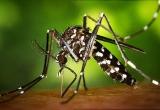 Việt Nam phát hiện 9 ca nhiễm virus Zika
