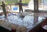 Gần 1,5 tấn lòng lợn thối ngâm trong bể xi măng hóa chất