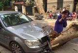 Hà Nội: Cây đổ đè 'nát' đầu xe ô tô cùng 3 xe máy