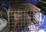 Nghệ An: Thả lô động vật quý hiếm về rừng