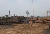 Gia Lai: Khai khống trồng rừng, trục lợi hàng tỉ đồng