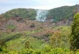 Nghịch lý phá rừng để… trồng rừng