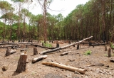 Lâm Đồng: Dân di cư tự do phá gần 2.500 ha rừng