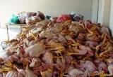 """Hà Tĩnh: Tiêu hủy gần 1,5 tấn """"thịt bẩn"""""""