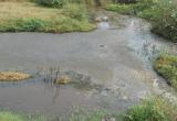 Bình Định: Mạnh tay xử lý các trại nuôi heo gây ô nhiễm