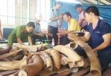 Cán bộ hải quan tự phá niêm phong, đánh tráo, chiếm đoạt 156kg ngà voi