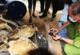 Vụ án lập 'kỷ lục thế giới' về tàng trữ xác rùa biển