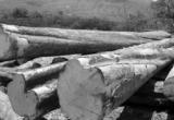Quản lý gỗ theo chuỗi: Gỗ lậu hết đường sống?