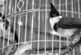 Thấy người khác trộm cũng tiện tay xách lồng chim, trả giá 8 tháng tù