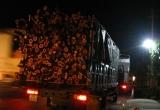 Thanh Hóa: Bắt đoàn xe chở quá tải