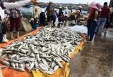 Cá chết hàng loạt ở Thanh Hóa: Bộ TN&MT kiểm tra đường ống thải Nhà máy lọc hóa dầu Nghi Sơn