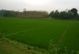 Chuyển mục đích sử dụng đất tại Thanh Hóa và Tiền Giang