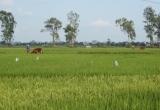 Chuyển mục đích sử dụng đất tại Thái Nguyên