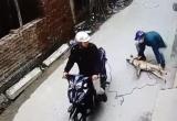 [Clip]: 'Cẩu tặc' dùng súng điện bắt trộm chó
