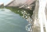 Hồ Tây tràn ngập... bao cao su đã qua sử dụng sau cơn mưa lớn