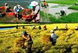 Nông nghiệp, nông thôn, nông dân đều chuyển mình mạnh mẽ sau 10 năm