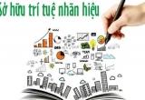 Xử lý đơn đăng ký xác lập quyền sở hữu công nghiệp tăng 6,3%