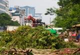Hà Nội: Bắt đầu chặt hạ, đánh chuyển 130 cây xanh trên đường Kim Mã