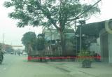 Cận cảnh nhà thờ họ Đặng của Chủ tịch UBND tỉnh Hà Tĩnh nằm 'sát' quốc lộ