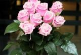 Thị trường ngày 8/3: Phát sốt với hoa hồng kim cương